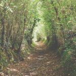 Promenade des arbres en chemin le dimanche 26 septembre 2021